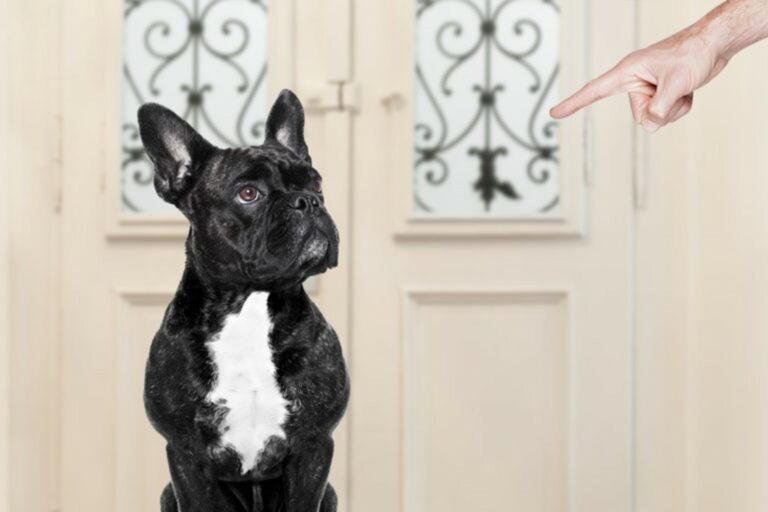 il cane disobbediente