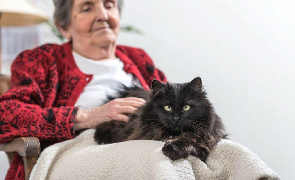 Gatto terapeuta con anziana