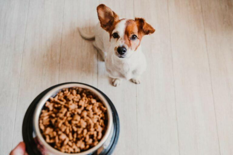 Alimentazione Del Cane Zooplus Magazine