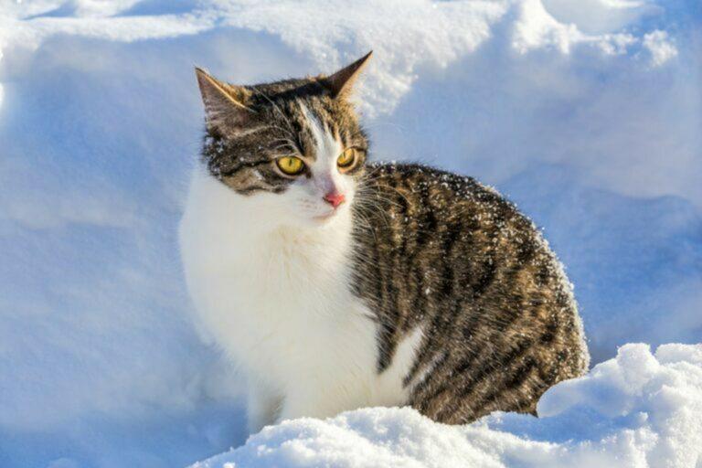 Gatto seduto sulla neve inverno