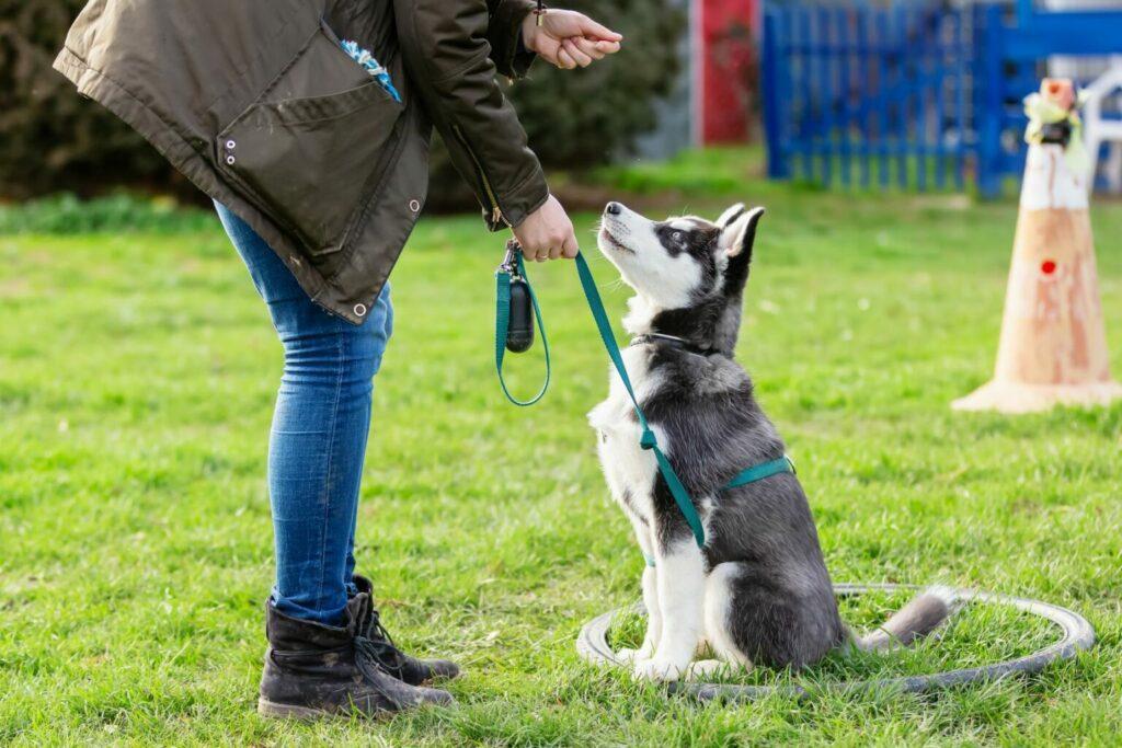 cane con guinzaglio al parco