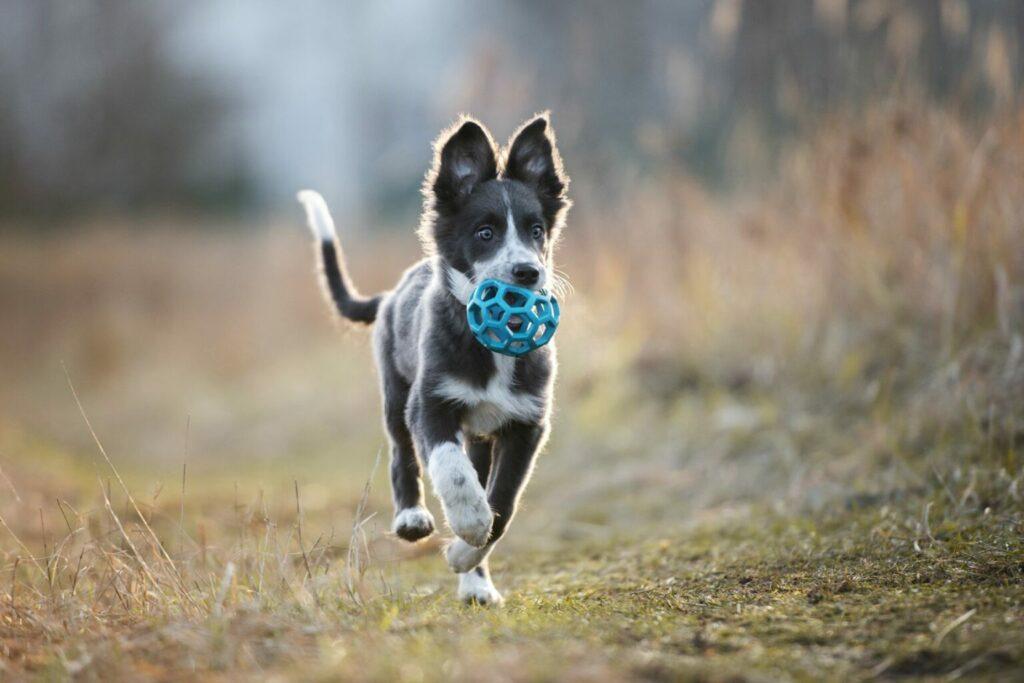 cane gioca con pallina all'aria aperta