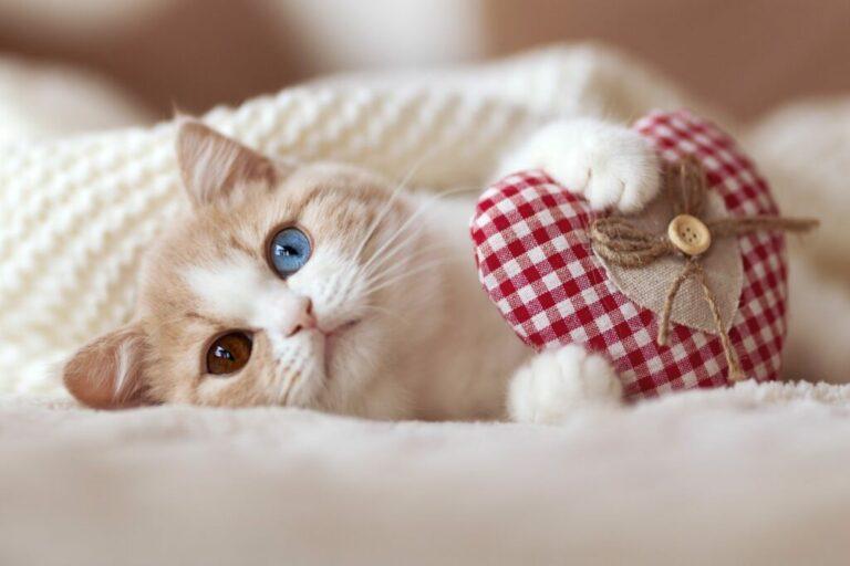 san valentino gatti