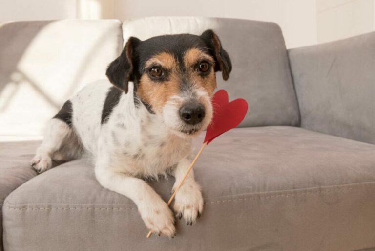 regali san valentino cani