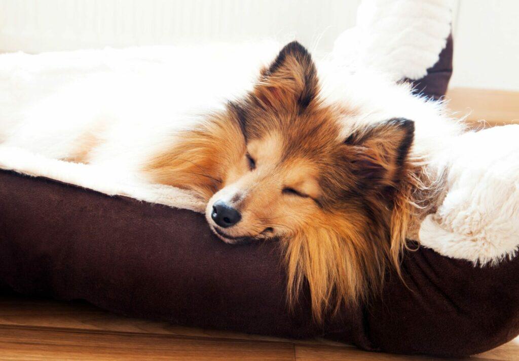 letto regalo di san valentino per cani