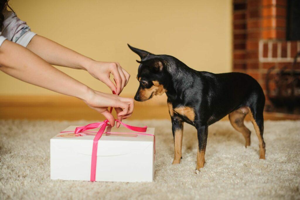 reaglo di San Valentino per cane