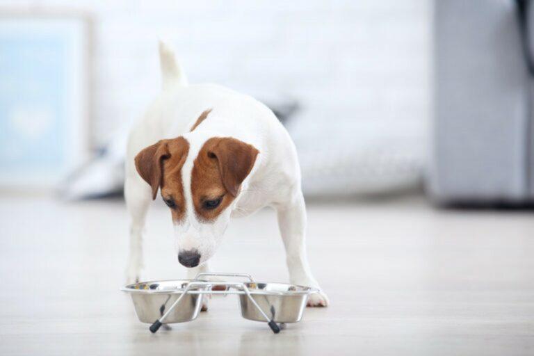 Cane che sta mangiando dalla ciotola