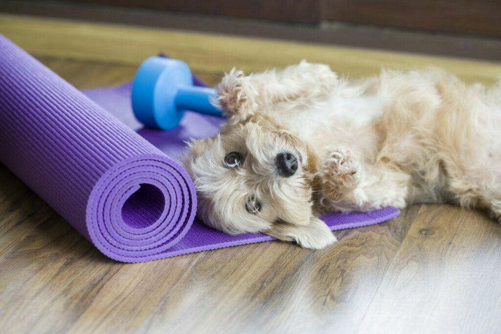 cane sul tappetino per fitness