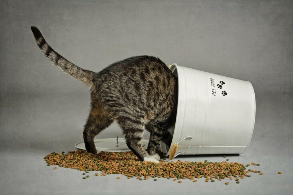 gatto dentro al cesto delle crocchette