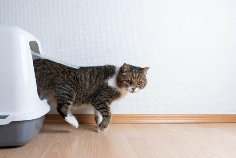 Gatto esce dalla toilette