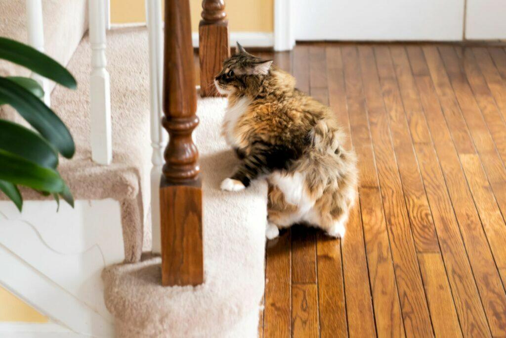 un gatto che fa le scale