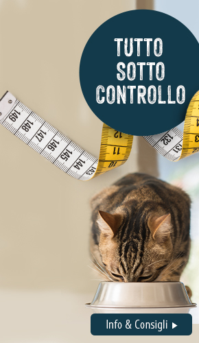Obesity_2021 Cat_L
