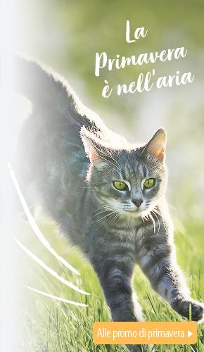 IT_Spring_2021_L_Cat