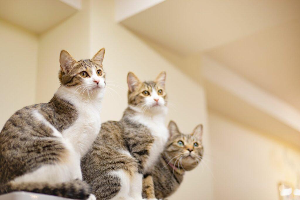 test per giardia nei gatti