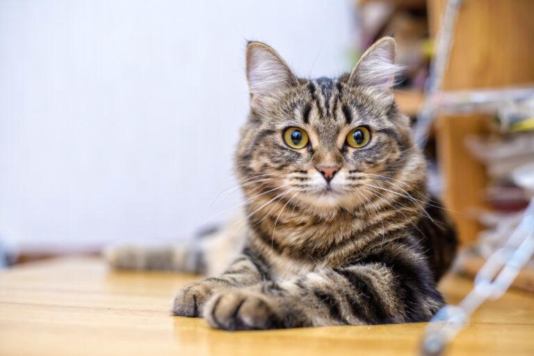giardia nel gatto