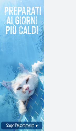 IT_Summer_Splash_Campaign_BG_Magazine