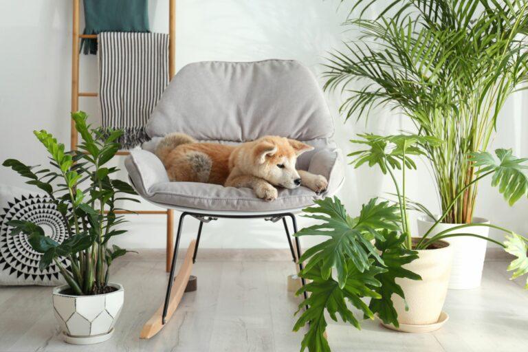piante velenose per cani