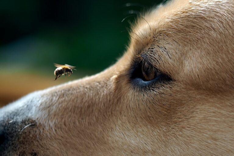 cane punto da ape