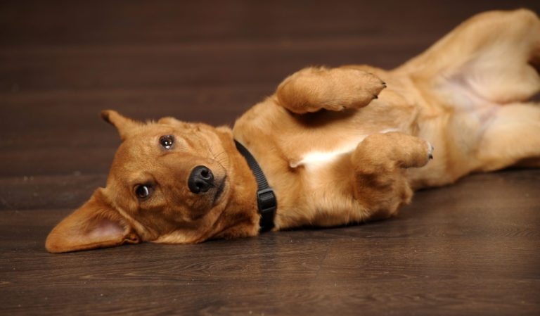 flatulenza nel cane