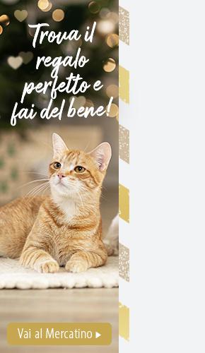 IT_Xmas21_Cat