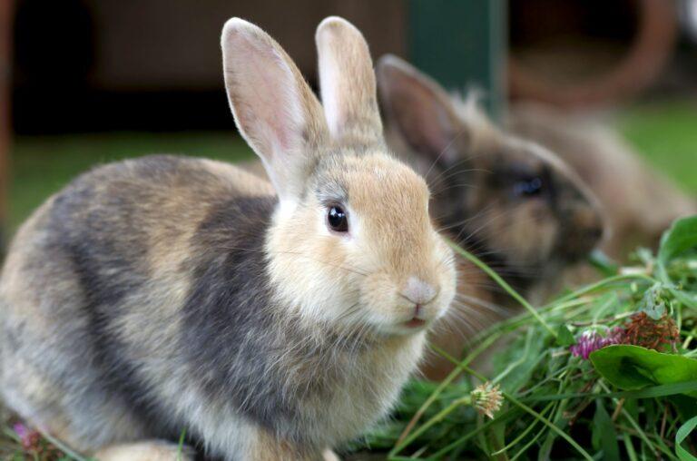 sterilizzazione coniglio